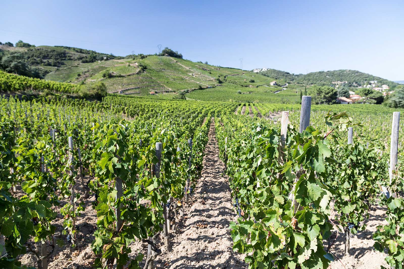 There are two Cornas. One that is broad and open-faced to the river (seen here); and another than is closed off by hills. The latter offers higher quality wines. ©Bernard Favre from Inter Rhône