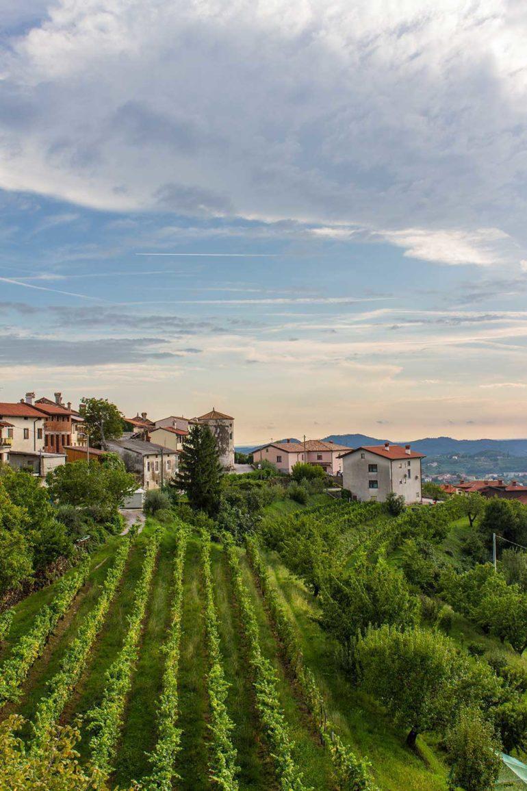 Campania vineyard landscape at dusk. S